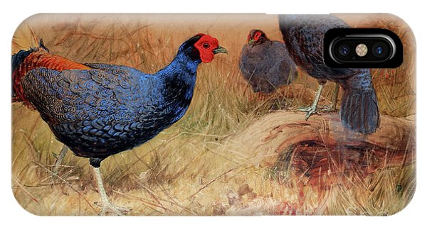 Rufous Tailed Crested Pheasant IPhone Case