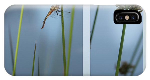 Rushes And Dragonfly IPhone Case