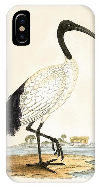 Sacred Ibis IPhone Case