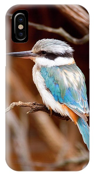 Avian iPhone Case - Sacred Kingfisher by Mike  Dawson