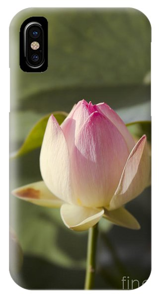 Sacred Lotus - Nelumbo IPhone Case
