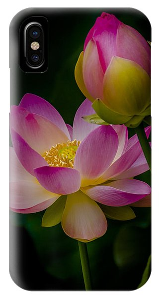 Sacred Water Lily 4 IPhone Case