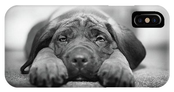 Mastiff iPhone Case - Sad Eyes by Ian McGregor