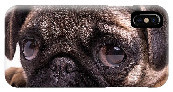 Pug iPhone Case - Sad Sack - Pug Puppy by Edward Fielding