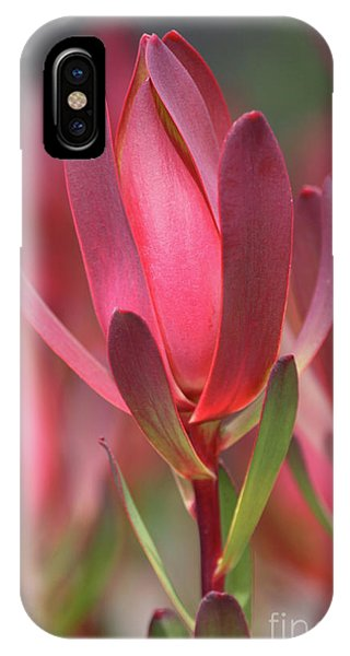 IPhone Case featuring the photograph Safari Sunset 2 by Chris Armytage