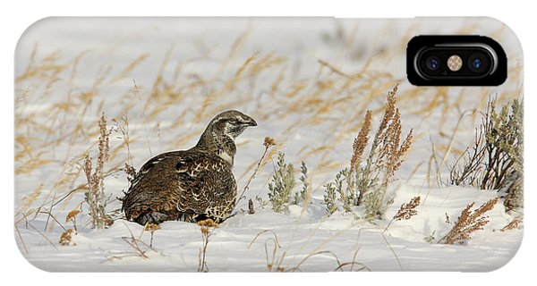 Sage Grouse IPhone Case