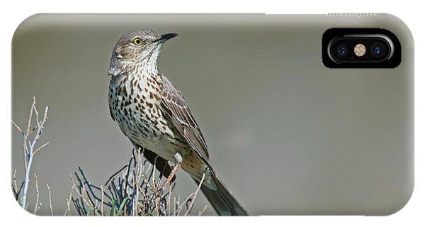 Sage Thrasher IPhone Case