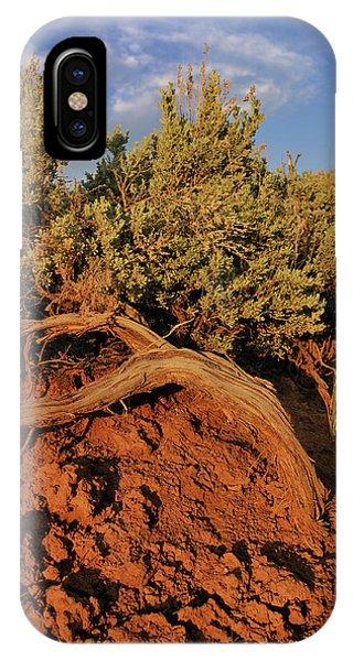Sagebrush At Sunset IPhone Case