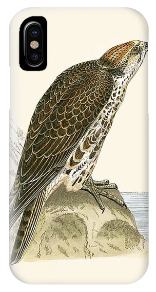 Saker Falcon IPhone Case