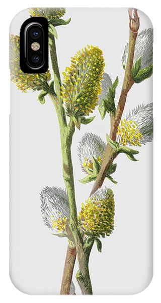 Flora iPhone Case - Sallow by Frederick Edward Hulme