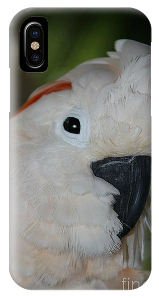 Salmon Crested Cockatoo IPhone Case