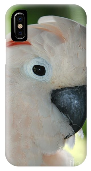 Salmon Crested Moluccan Cockatoo IPhone Case