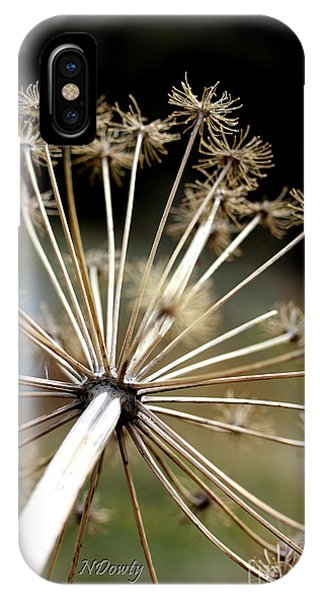 Salsify Stems IPhone Case