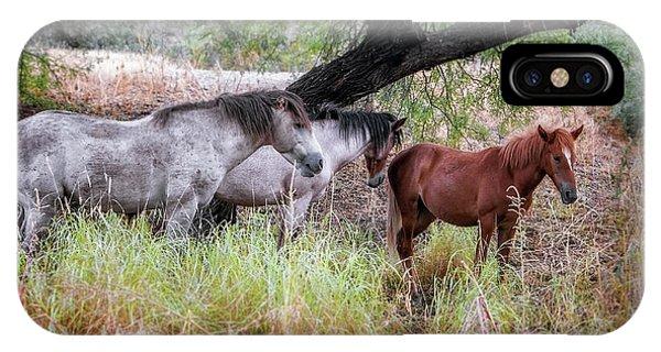 Salt River Wild Horses IPhone Case