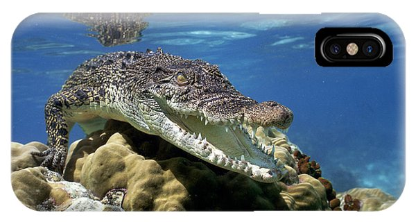 Saltwater Crocodile Smile IPhone Case