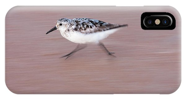 Sanderling On The Run IPhone Case