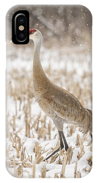 Sandhill Crane 2016-3 IPhone Case
