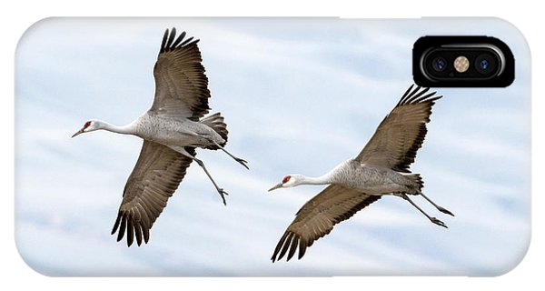 Sandhill Crane Approach IPhone Case