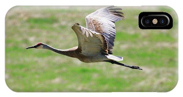 Sandhill Crane In Flight IPhone Case
