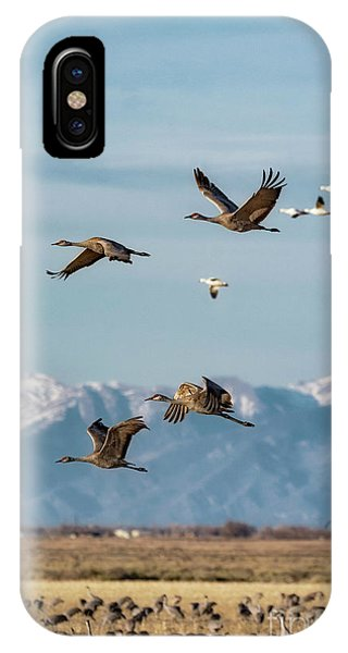 IPhone Case featuring the photograph Sandhill Crane Migration by Bitter Buffalo Photography