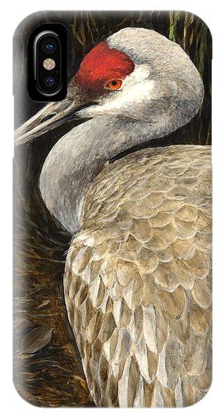 Hyper Realism iPhone Case - Sandhill Crane - Realistic Bird Wildlife Art by Karen Whitworth