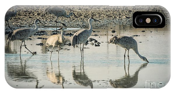 Sandhill Crane Reflections IPhone Case
