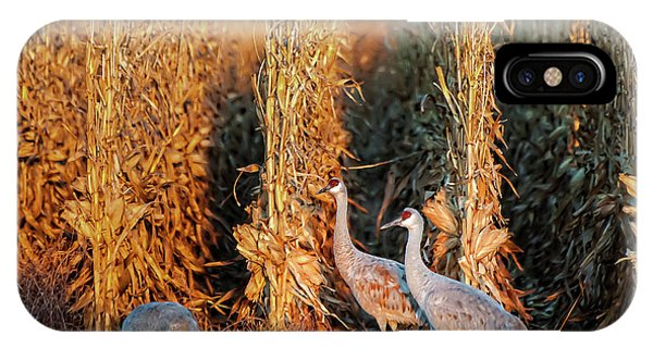 Sandhill Cranes At Sunrise IPhone Case