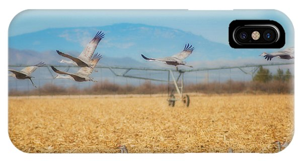 Sandhill Cranes In Flight IPhone Case