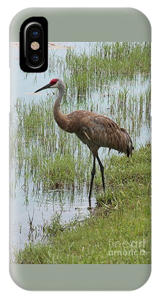 Sandhill In The Marsh IPhone Case