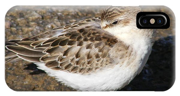Sandpiper IPhone Case