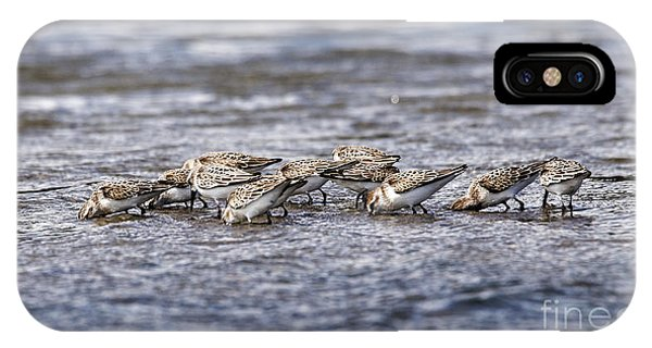 IPhone Case featuring the photograph Sandpipers Heads Down by Sue Harper
