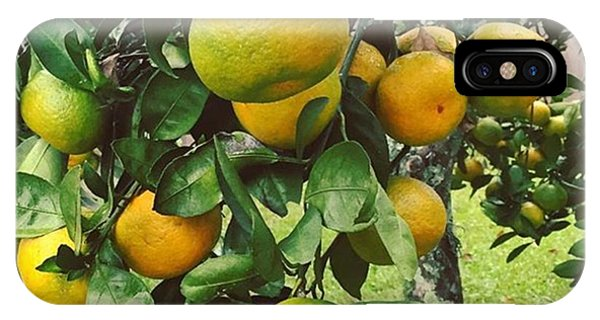 Orange iPhone Case - Satsumas..we Wait All Year For These by Scott Pellegrin