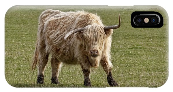 Sauvie Island Cow IPhone Case