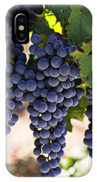 Sauvignon Grapes IPhone Case