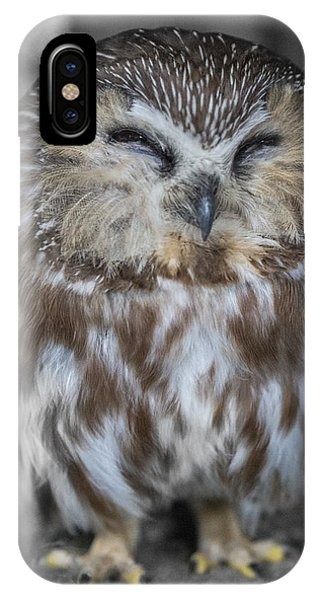 Saw Whet Owl IPhone Case