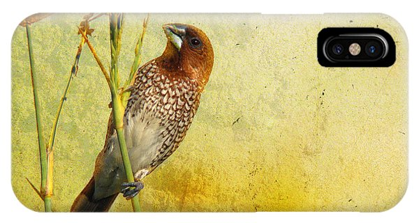 Scaly-breasted Munia IPhone Case