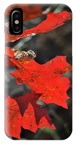 Scarlet Autumn IPhone Case