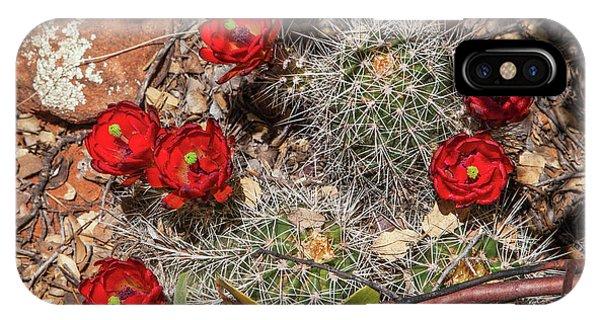 Scarlet Cactus Blooms IPhone Case