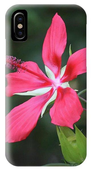 Scarlet Hibiscus #4 IPhone Case