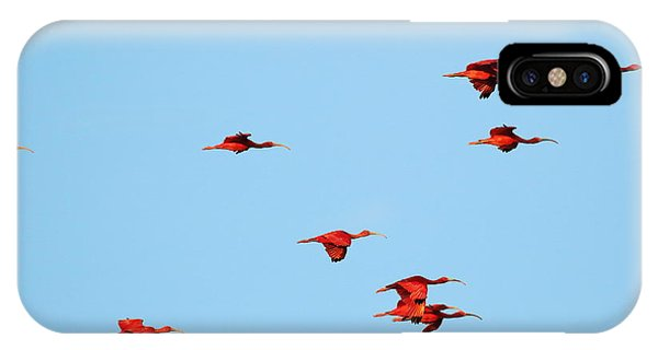 Scarlet Ibis At Caroni Swamp IPhone Case