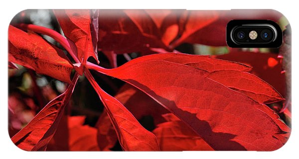 IPhone Case featuring the photograph Scarlet Intensity by Ron Cline
