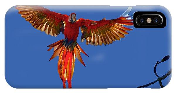 Scarlet Macaw On The Osa Peninsula IPhone Case