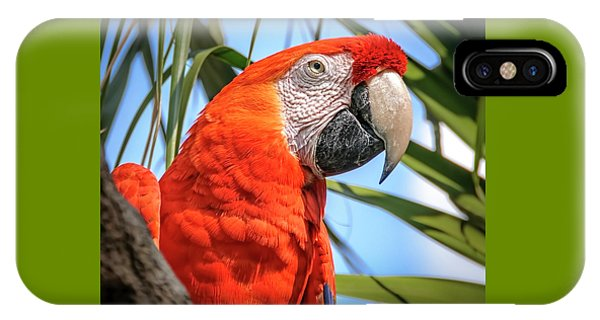 IPhone Case featuring the photograph Scarlet Macaw by Steven Sparks