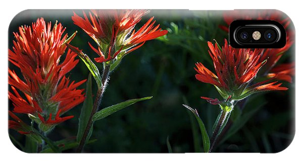 Scarlet Paintbrush iPhone Case - Scarlet Paintbrush 1 by Focus On Nature Photography