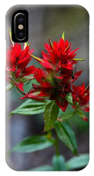 Scarlet Paintbrush iPhone Case - Scarlet Red Indian Paintbrush by Karon Melillo DeVega