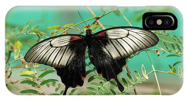 IPhone Case featuring the photograph Scarlet Swallowtail Butterfly -2 by Paul Gulliver