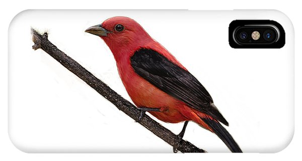 Scarlet Tanager On Branch IPhone Case