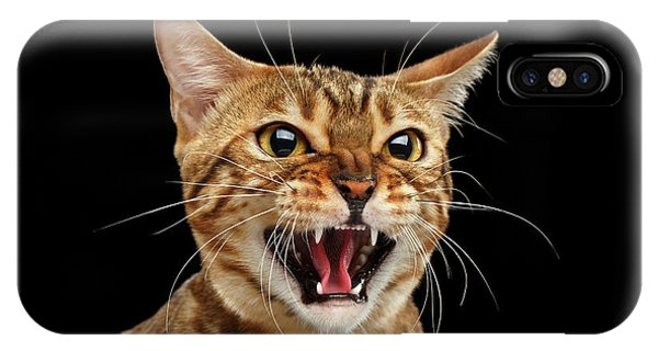 Cat iPhone Case - Scary Hissing Bengal Cat On Black Background by Sergey Taran