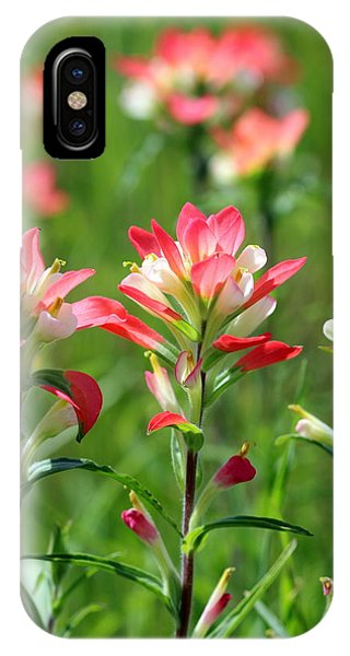 Scenic Paints IPhone Case