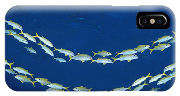 Barrier Reef iPhone Case - School Of Fish Great Barrier Reef by Panoramic Images
